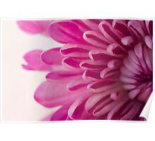 Magenta Petals Macro Floral Photograph Poster