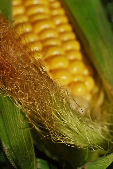 Corn on the Cob by Karin  Hildebrand Lau
