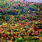 Fall's Here by Tommy Seibold