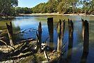 Murrumbidgee River at Narrandera by Darren Stones