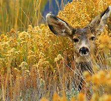 Colorado Deer by Danielle Marie Photography