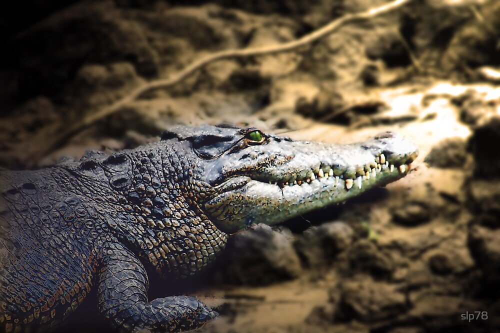 You are in Crocodile country. Never go in water deeper than your eyebrows standing on your head that is?! by slp78