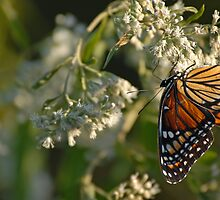 Upside Down Viceroy by Bonnie T.  Barry