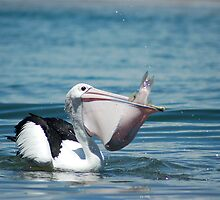 A Pelicans Supper by maromedia