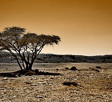 Last tree of desert by Victor Bezrukov