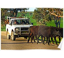Cattle Drive on the Henry Lawson Way Poster