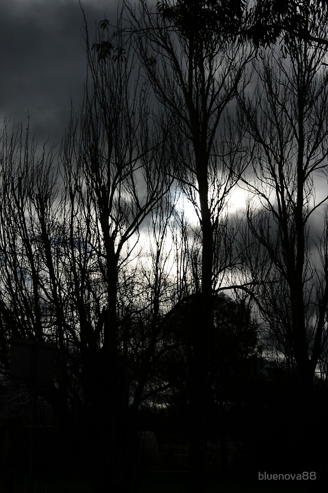 Dark Forest by bluenova88