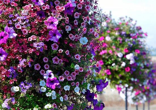 French Prairie Gardens in full color by Deri Dority