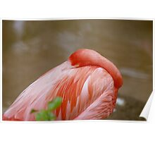 Grumpy Flamingo - What are you looking at? Poster