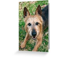 The Happy Terrier Greeting Card