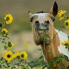Sunflower Thief! by Kent Keller