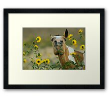 Sunflower Thief! Framed Print