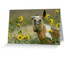 Sunflower Thief! Greeting Card