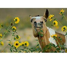 Sunflower Thief! Photographic Print