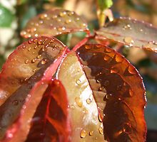 Morning Dew by Jason O'Reilly