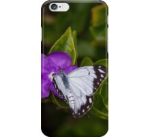 Male Caper White Butterfly Open Wings iPhone Case/Skin