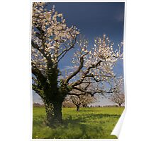 Blossoming trees in spring. Poster