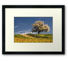 Blossoming cherry tree in spring  Framed Print