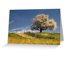 Blossoming cherry tree in spring  Greeting Card