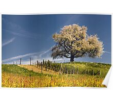 Blossoming cherry tree in spring  Poster