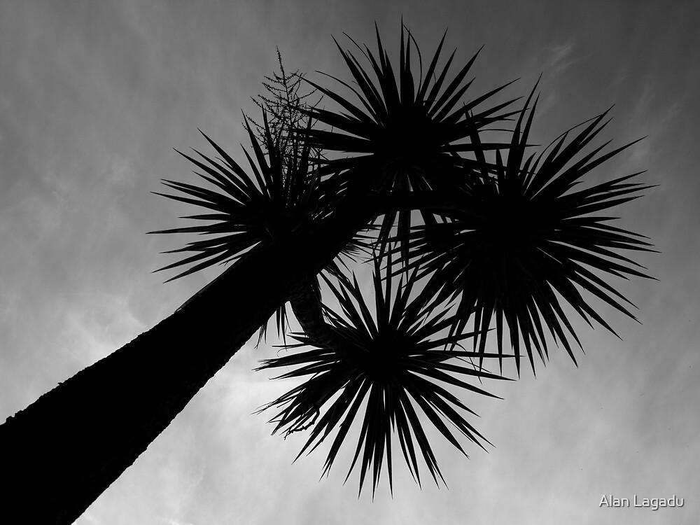 Jersey Palms by Alan Lagadu