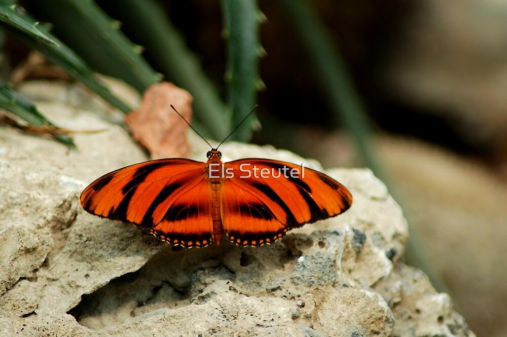 butterfly 2 by Els Steutel