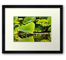 leafs on water Framed Print