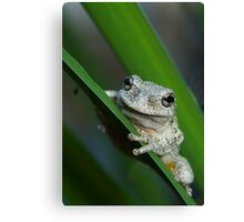 The prince of frogs Canvas Print