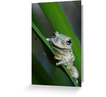 The prince of frogs Greeting Card