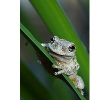 The prince of frogs Photographic Print