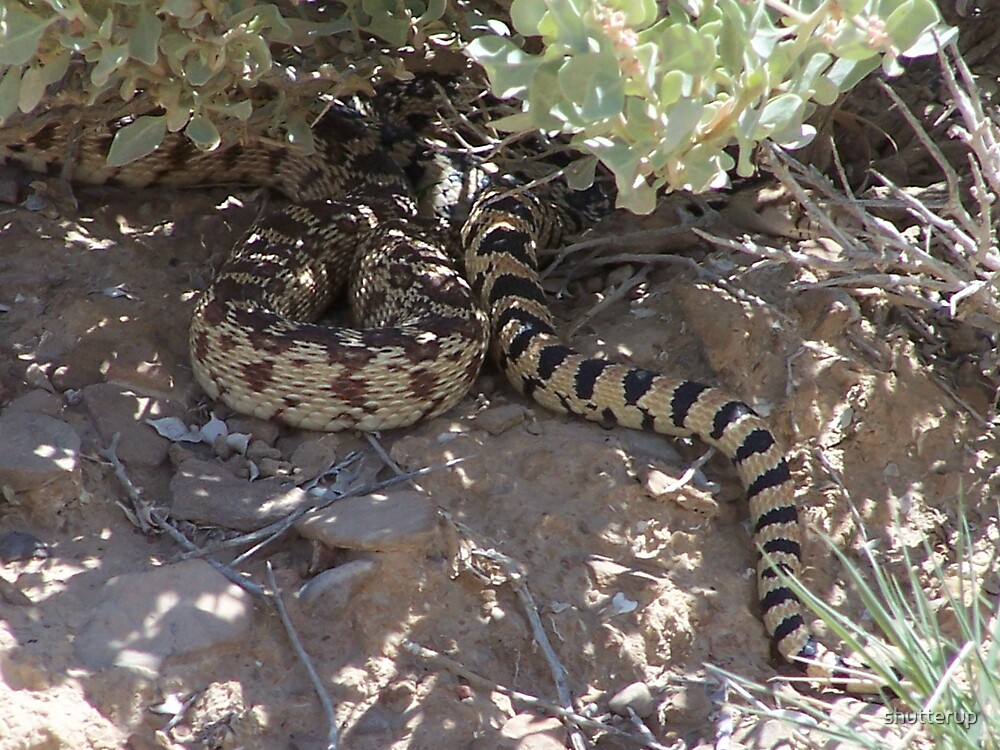 Snake in the Bush by shutterup
