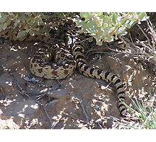 Snake in the Bush Photographic Print