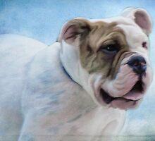 Beautiful Bull dog by vigor