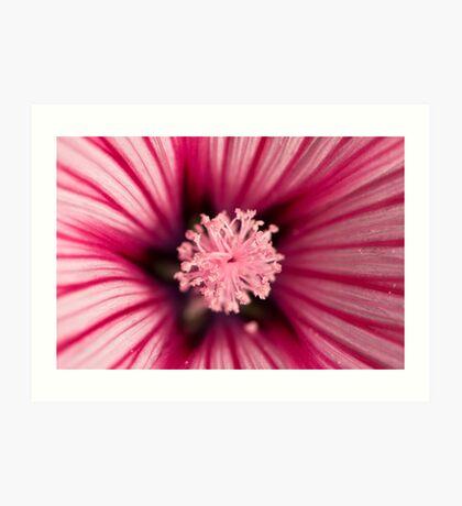 Macro of pink flower Art Print