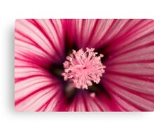 Macro of pink flower Canvas Print