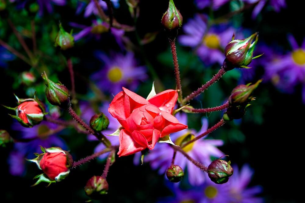 Rose Bulbs by Andréas Saudemont