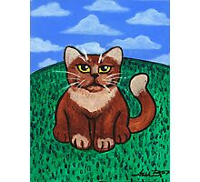 Fat Cat on the Hill Photographic Print