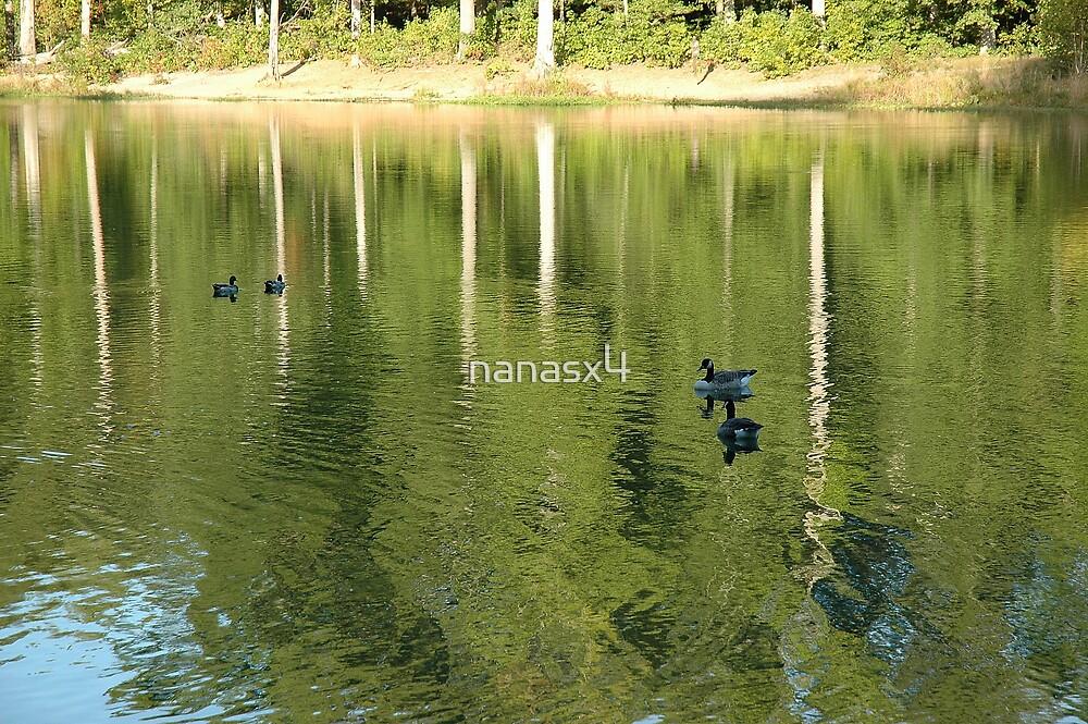Tree Reflection by nanasx4