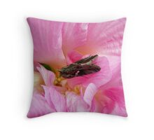 moth on a confederate rose Throw Pillow