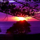 Napier Sunrise by karenvowell
