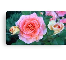 Pink & Yellow Roses Canvas Print