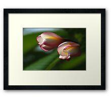 Visions of Frangipani Framed Print