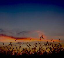 Fenestra by Dylan Reid