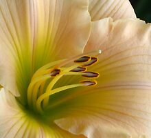 Lily by Marquee Smith