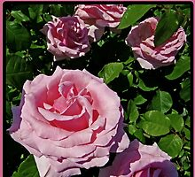 To My Wife Rose Greeting Card by GalleryThree