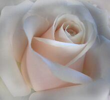 Single Pink Rose by Lorraine Creagh