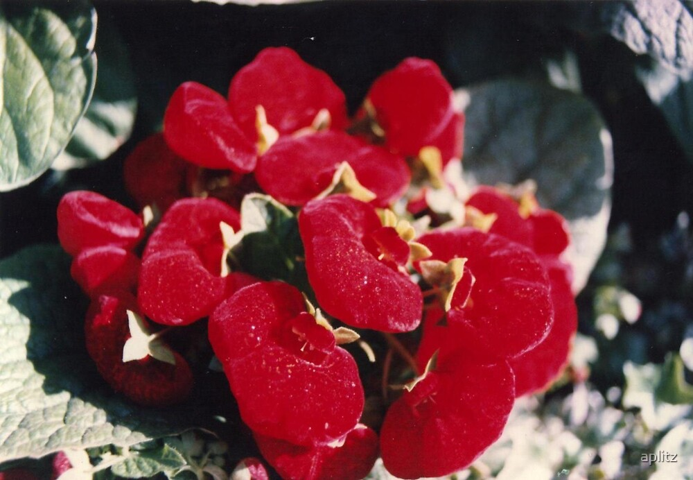 RED DRAGON by aplitz