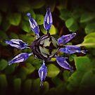 Purple in the garden by iamelmana