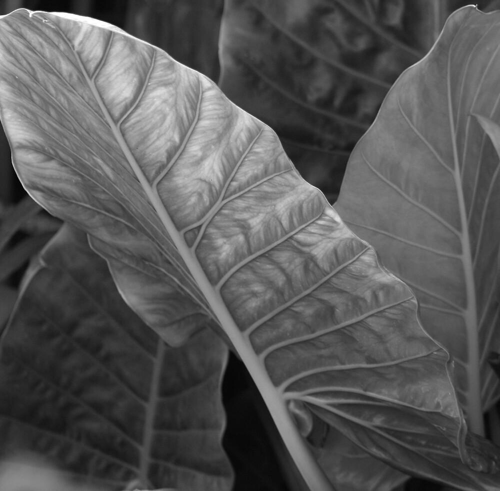 Black & White Leaf by wendels