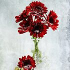 Christmas Flowers  by Nicole  Markmann Nelson